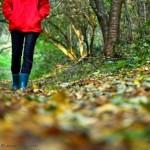 La Voluntad y la Actitud – Caminando por el Bosque